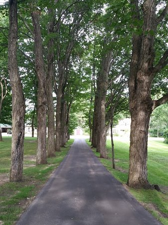 Bellaire, MI: Tree line drive