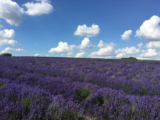 Cotswold Lavender (Broadway) - 2019 All You Need to Know