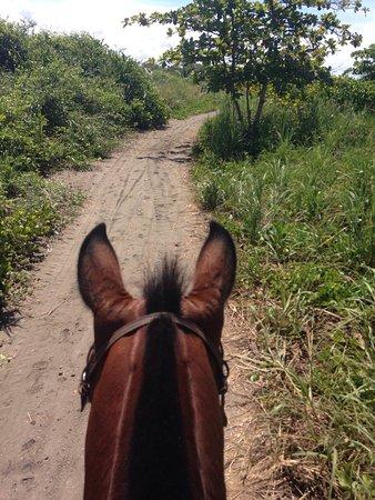 Esterillos Este, Costa Rica: We are CR Beach Barn! Happy healthy horses!