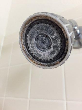 เคลียร์เลค, ไอโอวา: The shower head definitely needed a good soaking in vinegar.