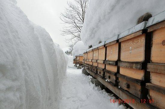 Thiersee, Austria: Bienenvölker in der Winterruhe