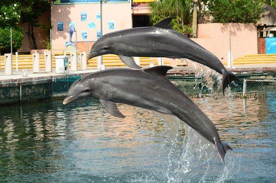 Dolphin Discovery Puerto Aventuras