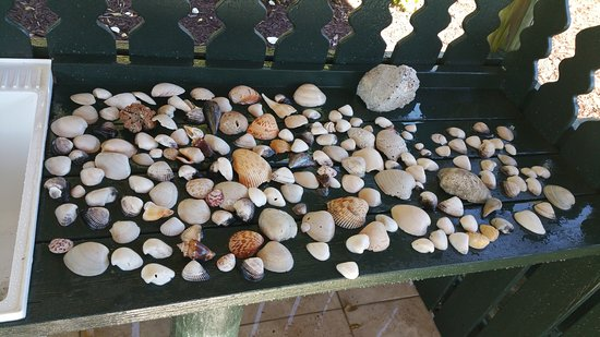 West Wind Inn: Our shell haul for one day