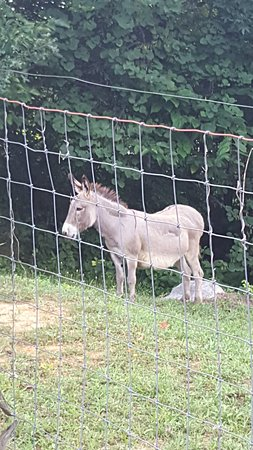 Pioneer Cabins & Guest Farm: Farm Donkey