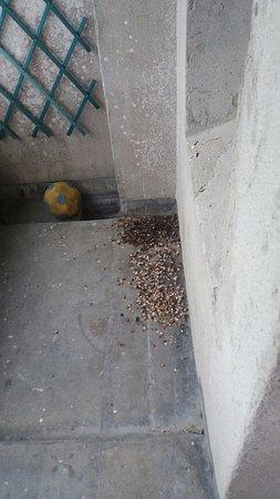 Camelot Castle Hotel: Bird droppings left on balcony