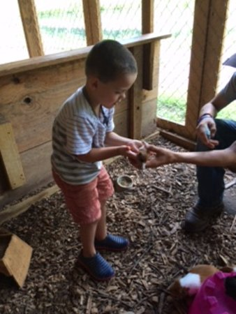 Clarkesville, GA: Rounding up guinea pigs
