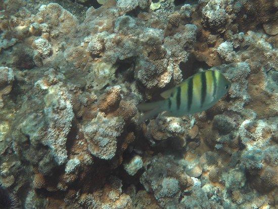 Pahoa, HI: fish
