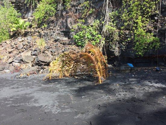 Pahoa, هاواي: little hut
