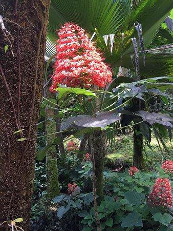 Papaikou, Χαβάη: flower