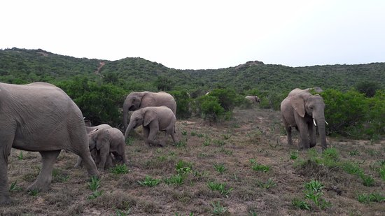 Shamwari Game Reserve, Νότια Αφρική: Safari - Elephants