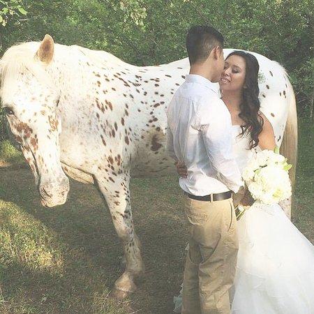 Kawartha Lakes, Kanada: Wedding photos taken with Dromoland Orchard and Stables. Horse: Monte