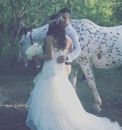 Kawartha Lakes, Canadá: Wedding photos taken with Dromoland Orchard and Stables. Horse: Monte