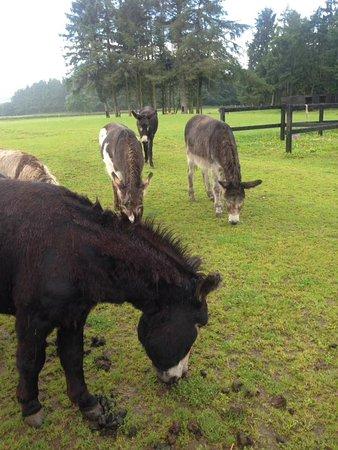 Forfar, UK: Lovely animals