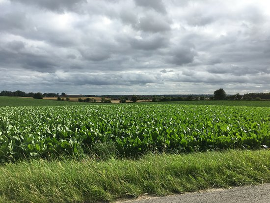 Stege, الدنمارك: Feld
