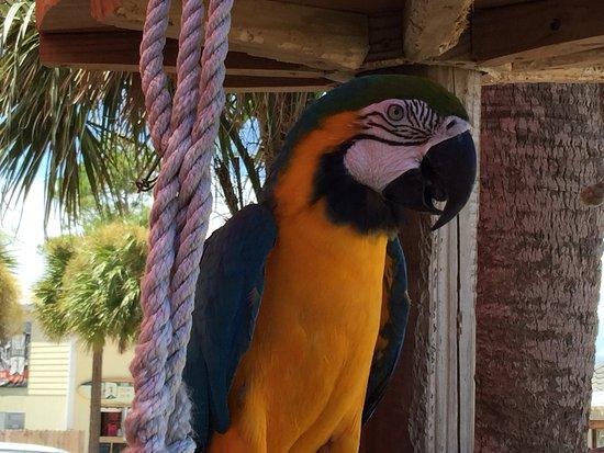 Sandestin, FL: photo1.jpg