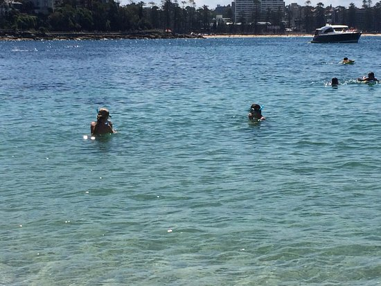 Shelly Beach: take your snorkel