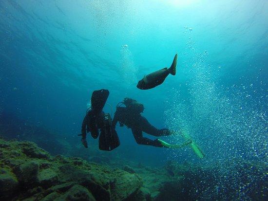 LJ Diving Tenerife: deux plongeurs