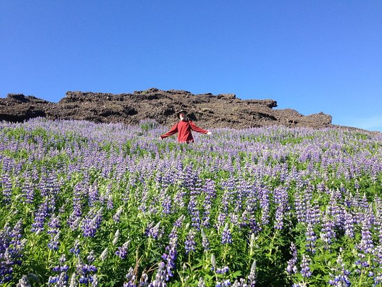 Mosfellsbaer, Islande : Beautiful walk uphill from the Guesthouse.