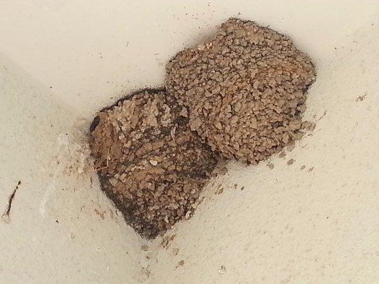 Veraclub Suneva: nidi di rondine in veranda