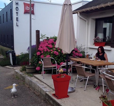 Ibis Dieppe Val Druel : Local seagull eyeing up the beer.