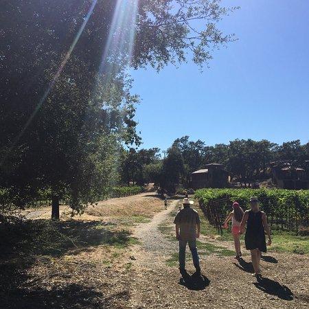 Healdsburg, Kaliforniya: Walk in the wines