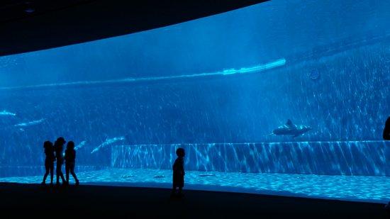 20160725 131307 picture of acquario di genova