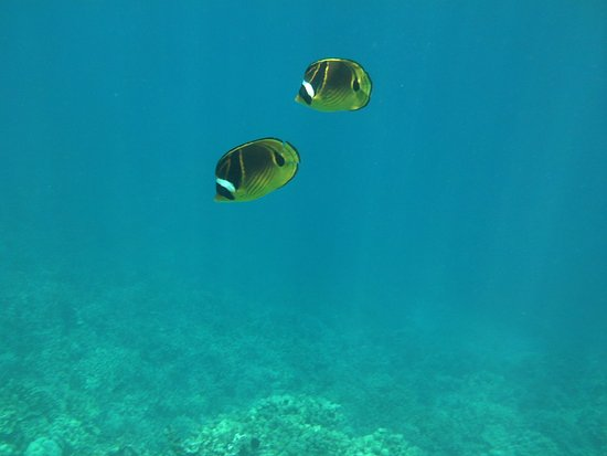 Sea Quest Snorkel Tours: fish