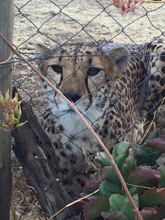 Cheetah Conservation Fund: photo0.jpg