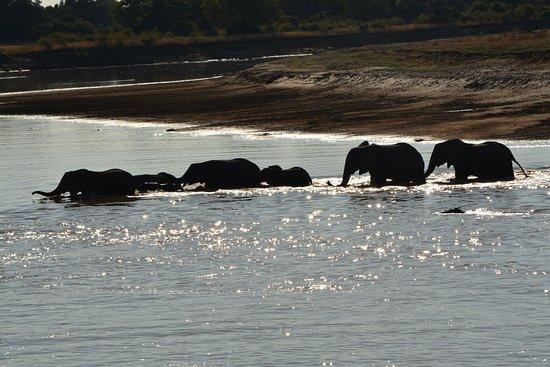 Kafunta River Lodge : Kafunta Safaris, S. Luangwa N.P., Zambia