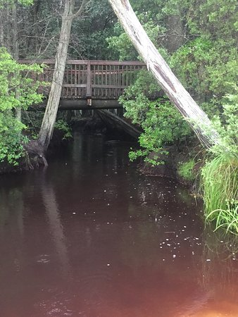 Wading Pines: The bridge