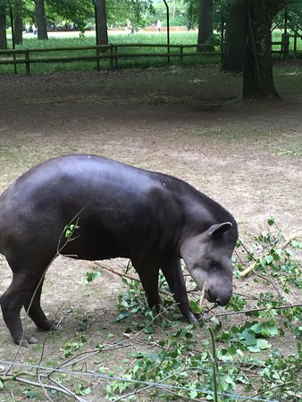 Burford, UK: tapir