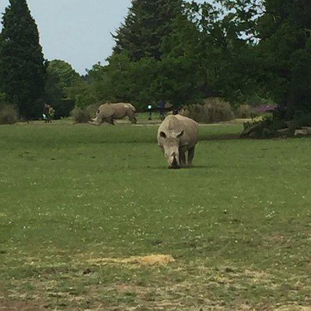Burford, UK: rhino
