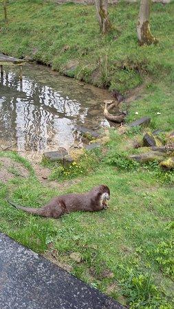Chapel-en-le-Frith, UK: Chestnut Centre Otter, Owl and Wildlife Park #6