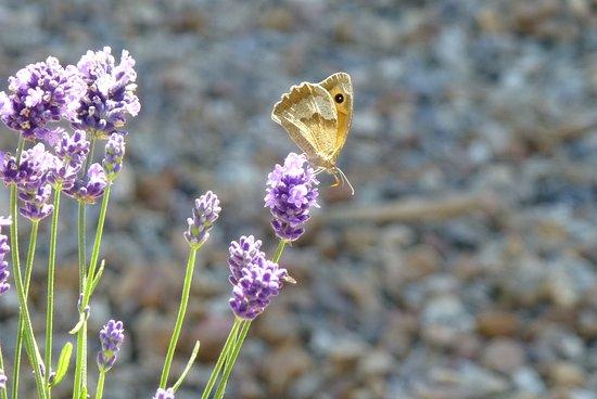 Precigne, France: Flora and Fauna