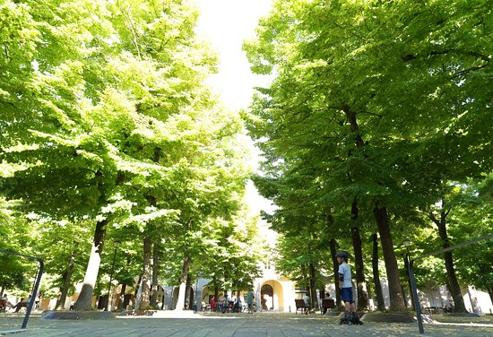 Reggio Emilia, Italia: piazza alberi e portico di piazza fontanesi