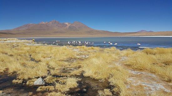Уюни, Боливия: Dá pra se aproximar bem dos flamingos!
