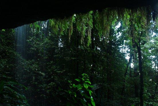 San Isidro de El General, Costa Rica: Una cortina de agua y musgo!