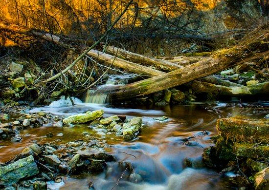 Kohtla, Estonia: Путь ручья по камням и бурелому