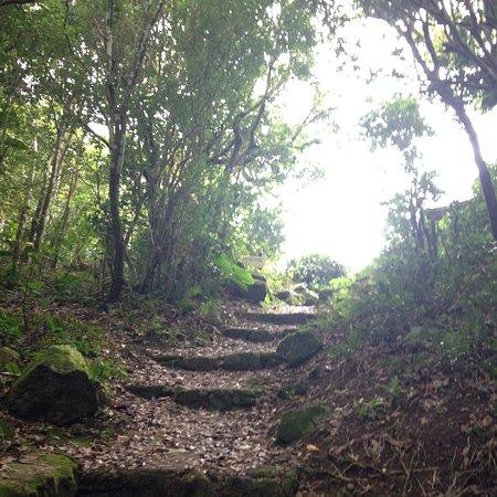 Windwardside, Saba: Mont Scenery