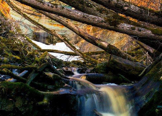 Kohtla, Estonia: Падающая вода, льющаяся через упавшие деревья