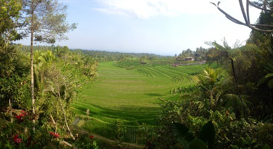 Jatiluwih Green Land: Lovely rice terraces view