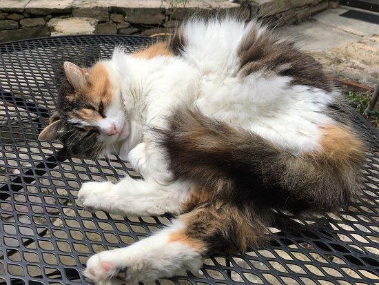 L'Ancienne Auberge: The Inn's courtyard cat