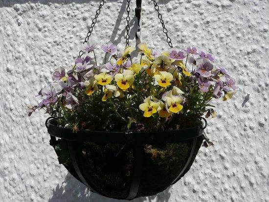 Tarbert, UK: Blumenampel an der Glenbarr