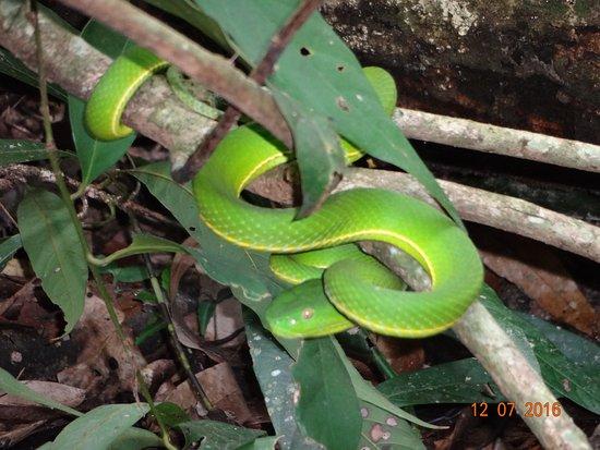 Национальный парк Кхао-Яй, Таиланд: Une belle rencontre