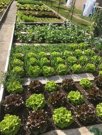 Tiers, Italia: Der Gemüsegarten hinterm Haus