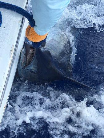Sandys Parish, Bermuda: Marlin #2
