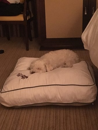 Westin Portland: Sam loved the Heavenly dog bed after a long day walking around Portland!
