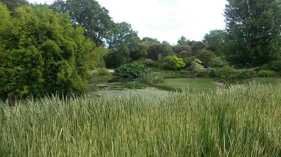 Combrit, França: Jardin  aquatique.