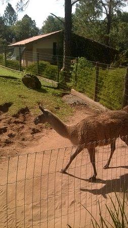 Sao Carlos, SP : animais interessantes