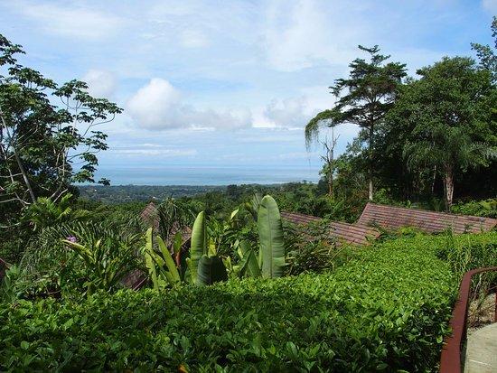 Oxygen Jungle Villas Photo